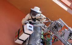Foto 5 - Los bomberos retiran un enjambre de abejas en la calle Juan Antonio Simón