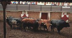 Los toros para esta tarde de Domingo de Calderas, en los corrales de San Benito.