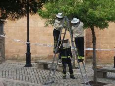 Los bomberos retiran un enjambre en el entorno de la concatedral de San Pedro