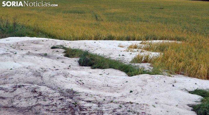 Granizo acumulado en un campo de cereal. /SN