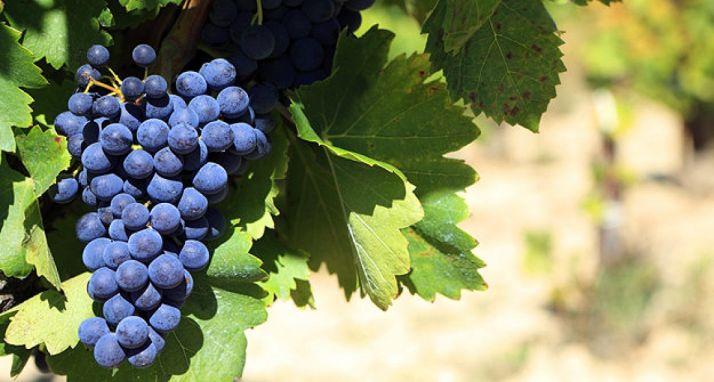 Foto 1 - Aumentan hasta los 7M€ las ayudas a reestructuración y reconversión de viñedo