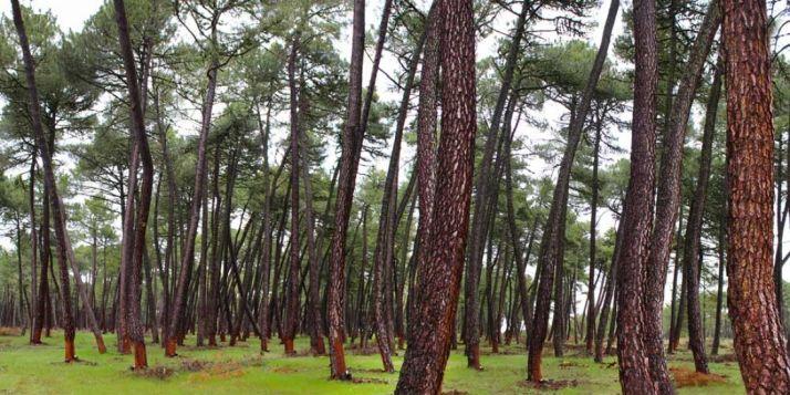 Foto 1 - La Junta financiará el mantenimiento de las cámaras de vigilancia forestal de la provincia