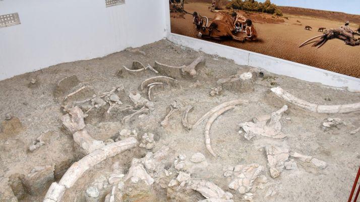 Museo 'in situ' en el yacimiento de Ambrona. /Jta.