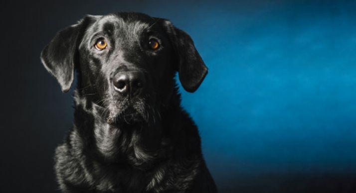 Foto 1 - La Guardia Civil pone en marcha la campaña de control e identificación de perros