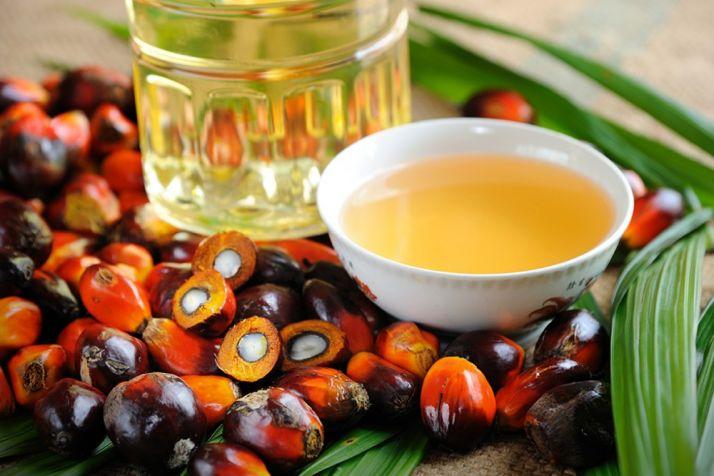 Foto 1 - Educación aclara que en los comedores de CyL no se usa aceite de palma