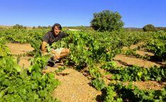 La publicación 'The Wine Advocate' destaca la calidad del vino soriano Taruguín