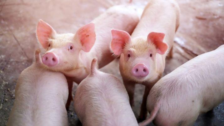 Foto 1 - El Ministerio de Agricultura priorizará la ordenación ambiental, sanitaria y zootécnica de las granjas