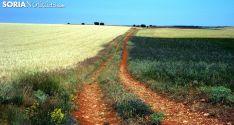 Un camino rural en la provincia. /SN