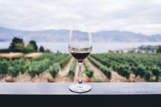 Vinissimus selecciona nueve vinos para disfrutar de lo mejor de las Islas Canarias