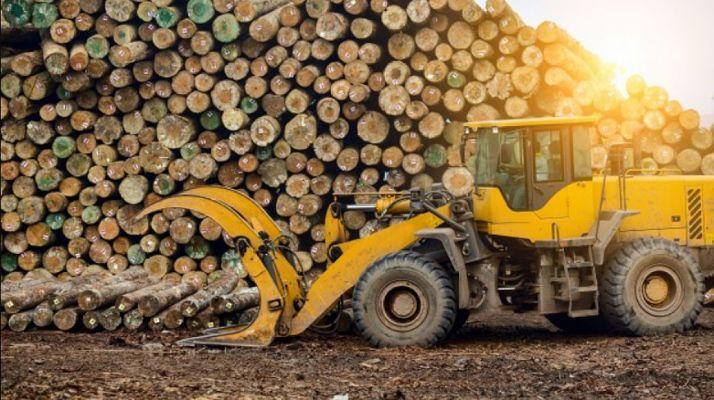 Foto 1 - Abejar saca a subasta aprovechamientos maderables por 87.000 €