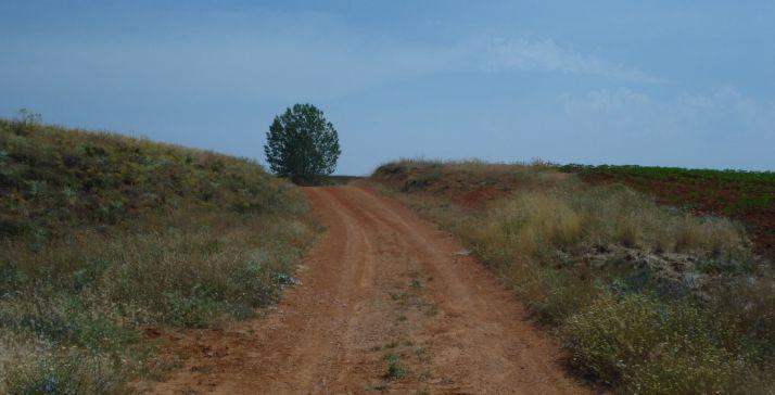 Camino Rural en un término de la provincia de Soria.