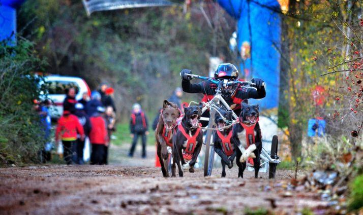 Foto 1 - Los mushers sorianos, a la altura de los internacionales en Ólvega