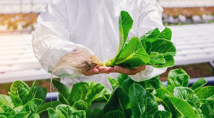 Foto 1 - Crecen un 7% las exportaciones hortofrutícolas de la Comunidad