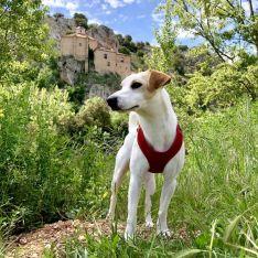 Una de las imágenes de la estancia de Pipper en Soria.