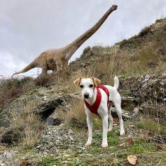 Pipper, en su viaje por Soria.