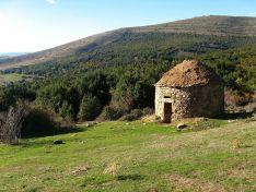 Imagen del acebal de Garagüeta, con un chozo pastoril.