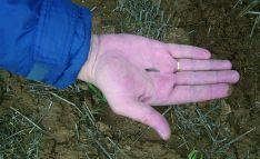 Una larva de zabro en un campo de la provincia. /ASAJA