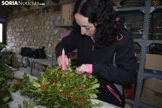 Cristina Martínez ya trabaja en el taller de El Acebarillo para llenar España de centros de acebo. SN