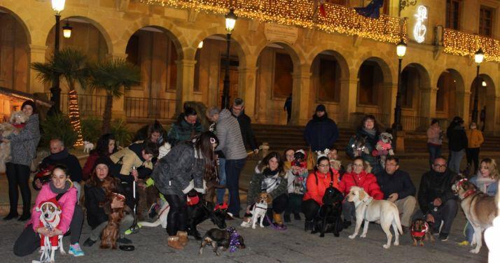 Foto 2 - Navidades perrunas en la capital