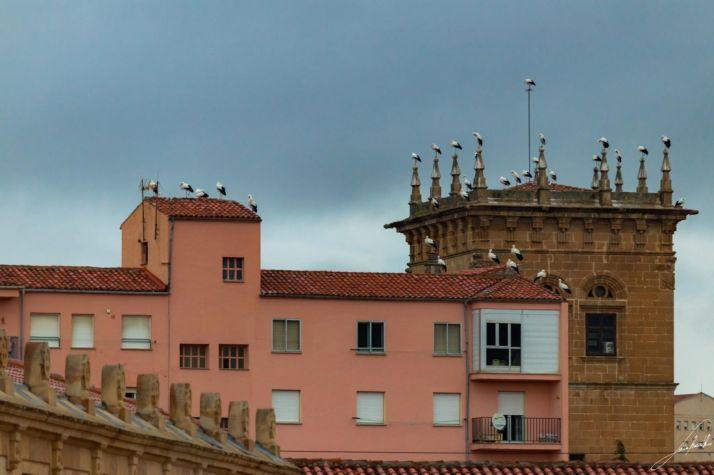 Cigüeñas en el Palacio de los Condes de Gomara. Sara Roncal.