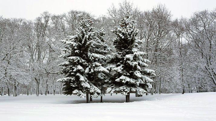 Foto 1 - Protección Civil declara la alerta por la previsión de nevadas y vientos en la Comunidad en las próximas horas