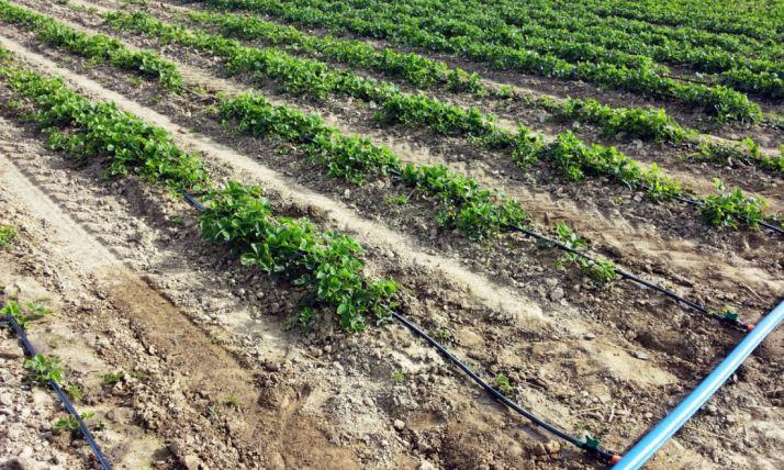 Foto 1 - Un nuevo curso explicará las posibilidades del regadío a los agricultores de Almazán