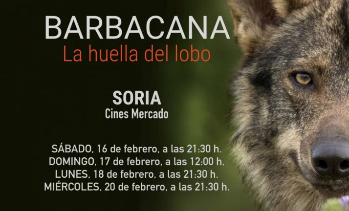Foto 1 - El lobo ibérico deja su huella en Soria