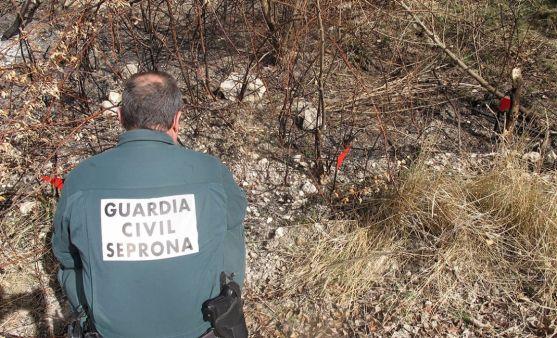 Un agente del seprona en el lugar del incendio. /GC