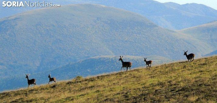 """Foto 1 - Los veterinarios de Castilla y León ven """"necesario"""" el control de las poblaciones de animales silvestres"""