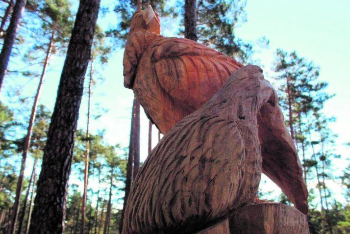 Foto 1 - Ruta entre pinos, de Navaleno a Covaleda