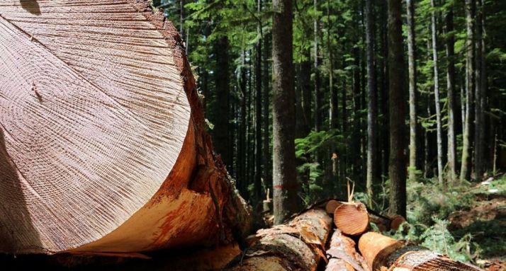 Foto 1 - Soria, sede de un encuentro sobre gestión de fundaciones medioambientales y forestales