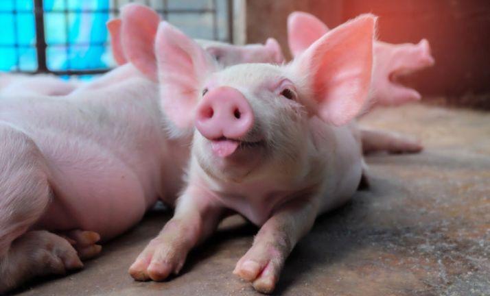 Foto 1 - Aprobada la autorización ambiental favorable para la granja porcina de Andaluz
