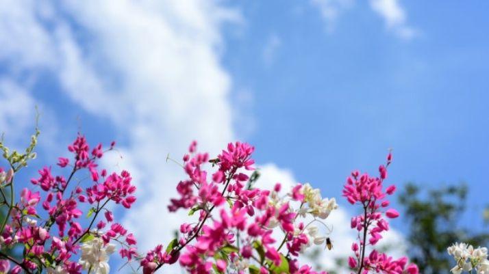 Ya es primavera en Soria. Imagen de archivo