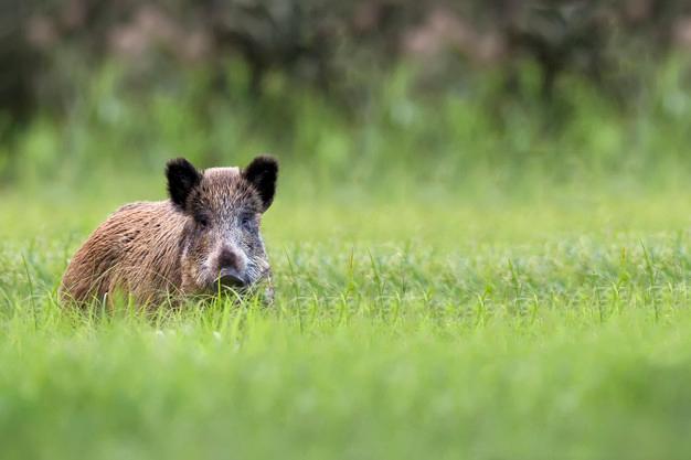 """Foto 1 - UPA Soria advierte de las """"terribles"""" consecuencias de la suspensión de la caza"""