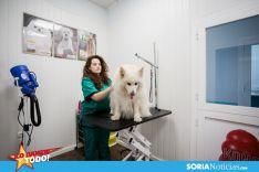 Foto 6 - LDT: Mi Mascota: Confianza y seguridad para los familiares peludos