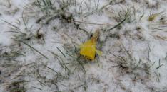 Nieva con intensidad en Duruelo de la Sierra. /Agustín Sandoval