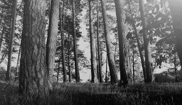 Foto 1 -  El Instituto Universitario de Gestión Forestal Sostenible, Premio de Investigación 2019 del Consejo Social de la UVa