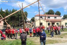 Foto 5 - El Pino Mayo de Navaleno permanece ya erguido con la banderola de 'Soria Ya'