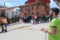 Pingada del Pino Mayo en San Leonardo.