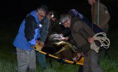 La Junta rescata un oso herido en León que ya se recupera Cantabria