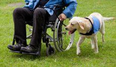 Un perro guía acompañando a una persona con discapacidad física.