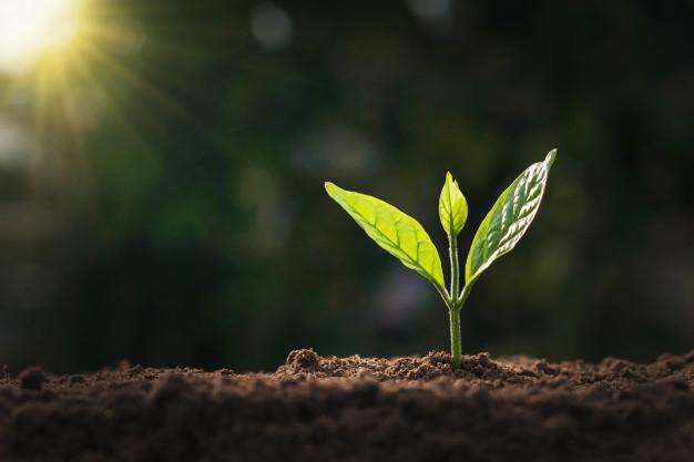 Foto 1 - La Junta destinará 56 M€ a las medidas de agroambiente y clima