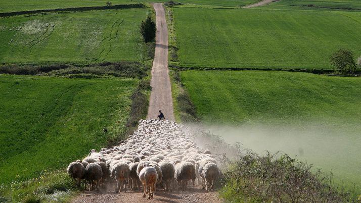 """Foto 1 - UPA propone que la PAC """"premie"""" la labor medioambiental de la agricultura familiar"""