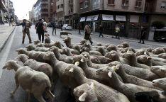 Foto 3 - Cencerros de la Trashumancia en la capital. Oveja que bala, bocado que pierde