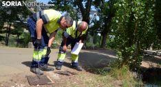 Operarios municipales inspeccionan una cometida eléctrica tras un robo de cableado en 2014. /SN