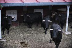 Foto 2 - Los toros de Salvador Domecq para el cartel estrella de la feria taurina de Soria ya están en la plaza de San Benito