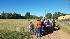 Visita a los campos de experimentación de la Escuela Universitaria de Ingeniería Agrícola de Valladolid (INEA) el pasado 31.