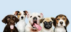 La segunda prueba de la Liga Nacional de Perros Detectores se realiza este fin de semana en Ágreda