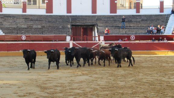 Desenjacojonamiento 2019 de los novillos de Hermanos Marcén. /SN