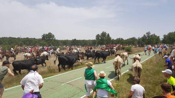 La Saca 2019 entra en Soria.